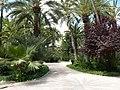La palmeraie de elche - panoramio (12).jpg