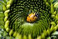 Ladybug flower bed.jpg