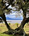 Lagoa de Itapeva e adjacências 12.jpg