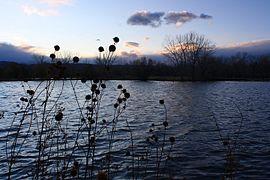 Lake at Dusk in November.jpg