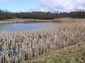 Lakes, Great Notley Country Park - geograph.org.uk - 662885.jpg