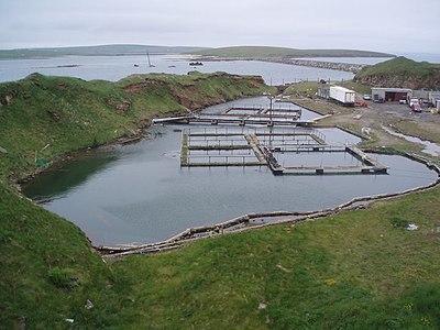 Картинки по запросу Рыбоводческая ферма