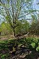 Landschaftsschutzgebiet Röderhofer Teiche und Egenstedter Forst - Sonnenberg-Wäldchen (3).JPG
