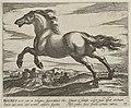 Landschap met paard uit Mauretanië. NL-HlmNHA 1477 53011511.JPG