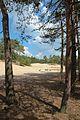 Landschap van de Loonse en Drunense duinen.jpg