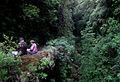 Laurissilva da Madeira 09.jpg