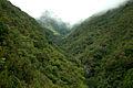 Laurissilva da Madeira 17.jpg
