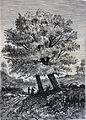 """Les merveilles de l'industrie, 1873 """"Châtaignier"""". (4727183354).jpg"""