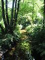 Leuvenumse bos.jpg