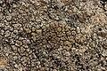 Lichen (28146714857).jpg