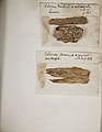 Lichenes Helvetici pars altera 016.jpg