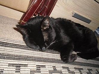 Black cat - A 16-year-old female black cat, sleeping
