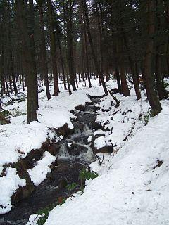 Limb Brook Stream in Sheffield, England