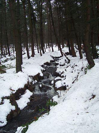 Limb Brook - Limb Brook in Lady Cannings's Plantation above Ringinglow