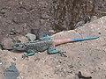 Lizard in Yemen.JPG