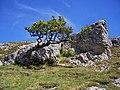 Llandudno - panoramio (8).jpg