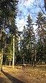 Lobnya, Moscow Oblast, Russia - panoramio (443).jpg