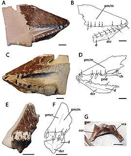 <i>Lonchodraco</i> genus of reptiles (fossil)