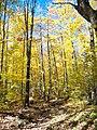 Lookout Trail, Algonquin Park.jpg
