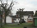 Lopped trees, Arden Drive, Dorridge B93 - geograph.org.uk - 2196847.jpg