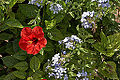 Lower barrakka gardens-IMG 1625.jpg