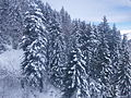 Luchon Superbagneres neige dans les arbres - 2016b.jpg