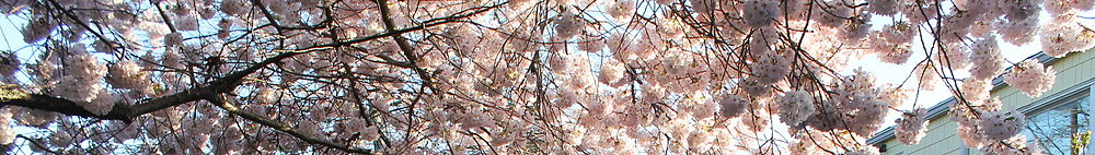 Lumpytrout Wikivoyage Page Banner Washington tree blossom.JPG
