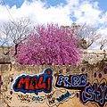 Mali free sty (473691501).jpg