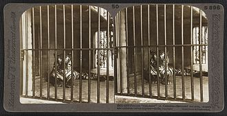 Tiger attack - Stereographic photograph (1903) of the captured Man-eater of Calcutta in the Calcutta zoo. The tiger had earlier claimed 200 human victims.