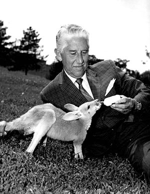 Wild Kingdom - Marlin Perkins bottle-feeding a young kangaroo