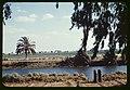 Mashuta (Pithom), Egypt LOC matpc.23182.jpg