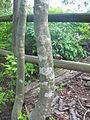 Mason Neck State Park - lichen.jpg