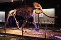 Mastodon Skeleton, Luoyang.jpg