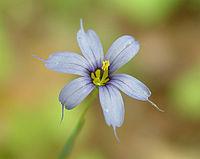 Maysmallpurpleflower