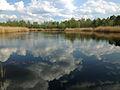 Mazowiecki park krajobrazowy jezioro torfy.jpg