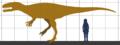 Megalosaurus SIZE.png