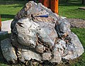 Metamorphosed pillow basalt (Ely Greenstone, Neoarchean, ~2.722 Ga; large loose block at Ely visitor center, Ely, Minnesota, USA) 8 (21453463175).jpg