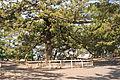 Miho no Matsubara 06.jpg