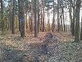 Mikolow, Poland - panoramio (159).jpg