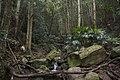 Minnamurra Rainforest - panoramio (25).jpg