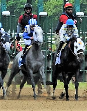 Mohaymen - Mohaymen (left) at the start of the Jim Dandy Stakes
