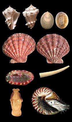 Mollusca.jpg
