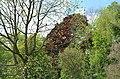 Monceau-sur-Sambre - parc - 2019-05-12 - 10.jpg
