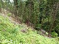 Mount Takao - Trail 1 (9406610457).jpg