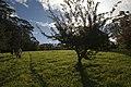 Mount Wilson NSW 2786, Australia - panoramio (1).jpg