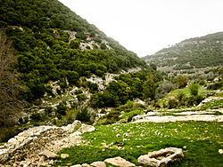 Mountains in the upper galilee.jpg