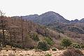 Mt.Hirugatake 39.jpg