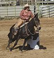 Mule Barrel Racing.jpg