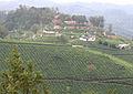 Munnar - views from Munnar (2).jpg