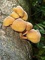 Mushroom Pakke unid 3.jpg